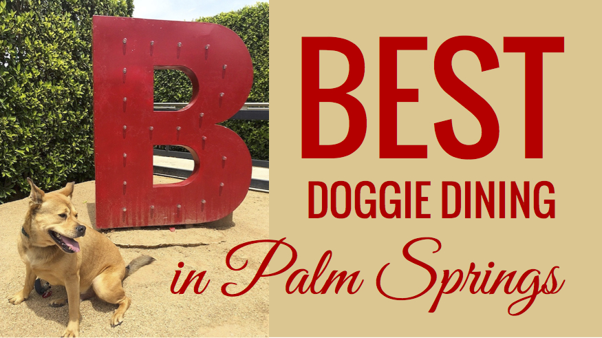 Best Dog-Friendly Dining in Palm Springs - Bodie On The Road