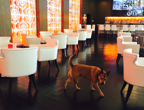 Bodie S Guide To Dog Friendly Hotels In Palm Springs