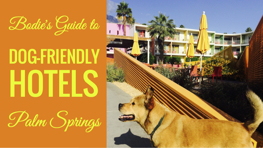 Dog Friendly Hotels Palm Springs