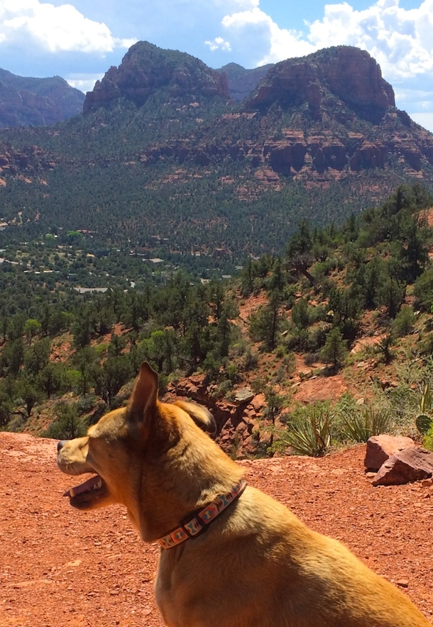 scenic-dog-friendly-sedona-bodie-on-the-road