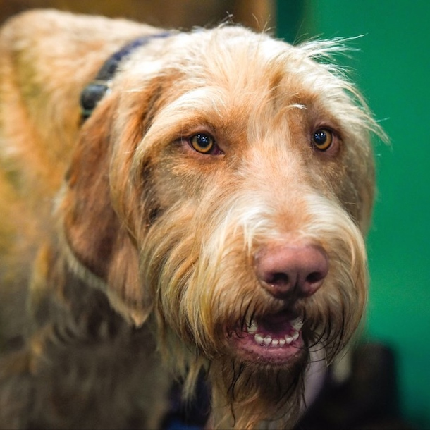 16 Things I Learned At Crufts 2016 Bodie On The Road