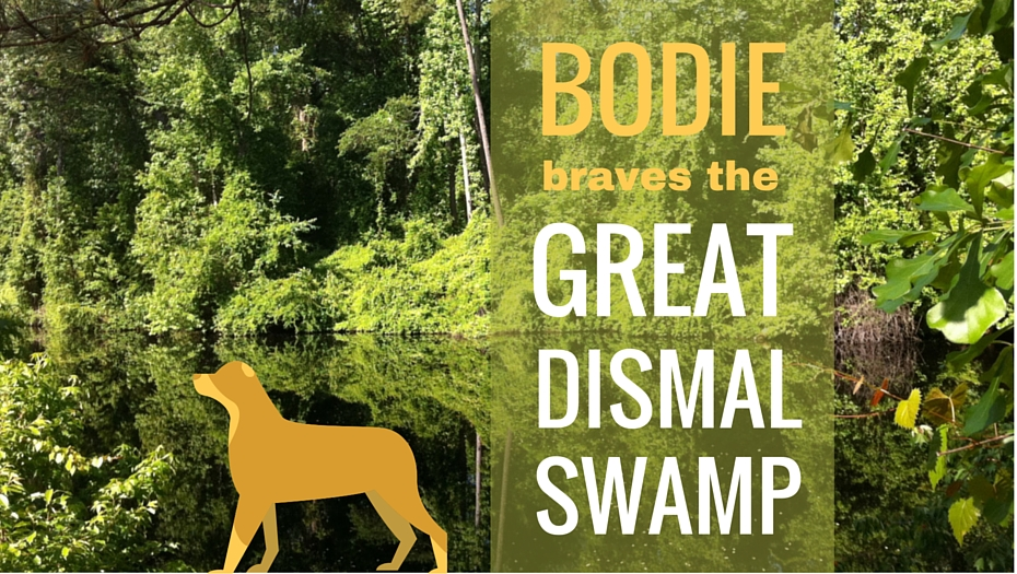 Great Dismal Swamp for dogs