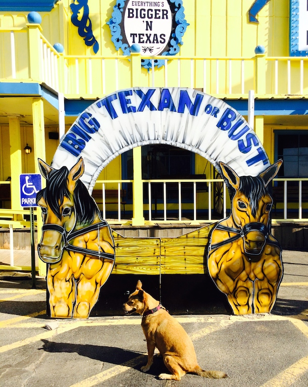Bodie at the Big Texan Steak Ranch