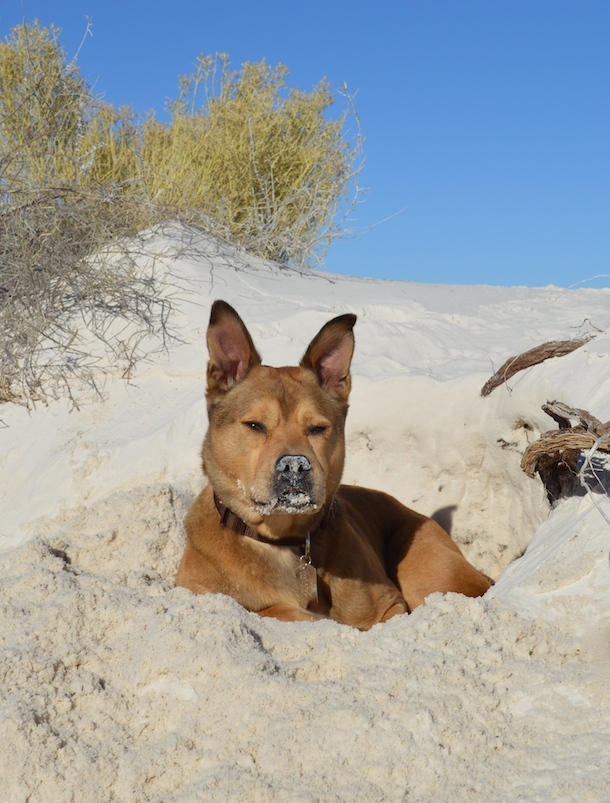 dog-friendly-whitesandsnationalmonument