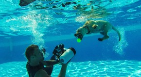 Seth Casteel shooting dog underwater