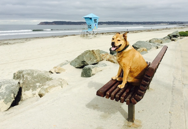 bodie-bench-dog-friendly-coronado