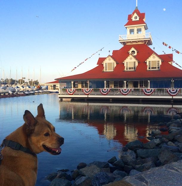 dog-friendly Coronado - Bodie beside the boathouse at sunset