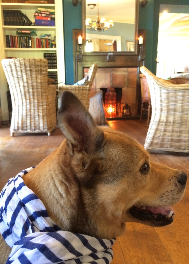 Dog wearing nautical scarf in lounge of The Ness hotel shaldon