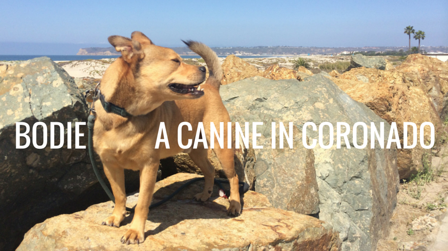 A Canine in Coronado header - bodie on the rocks