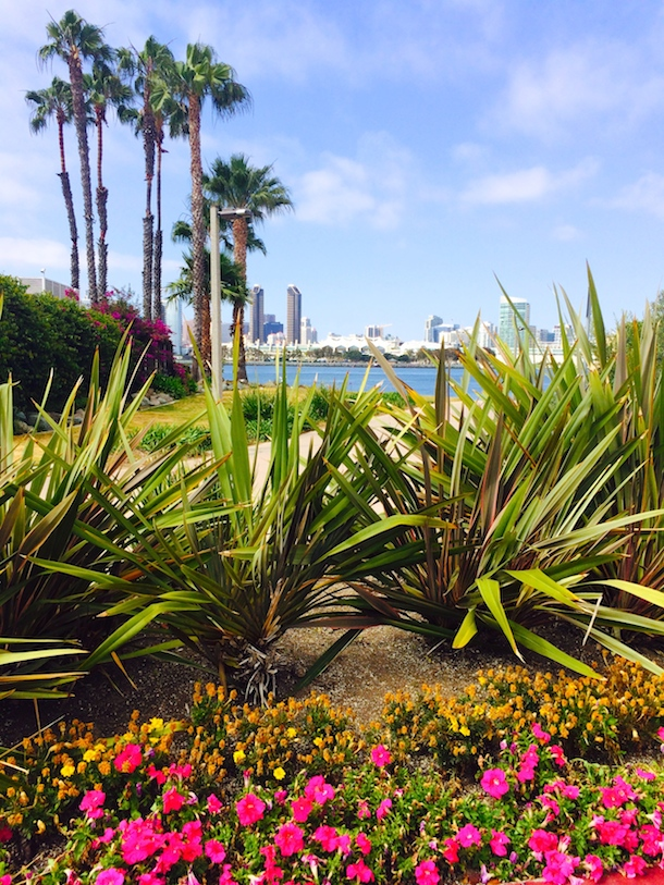 Beautiful coronado bay with flowers