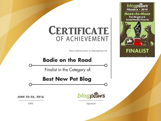 bodie-blogpaws-2016-certificate-best-new-pet-blog