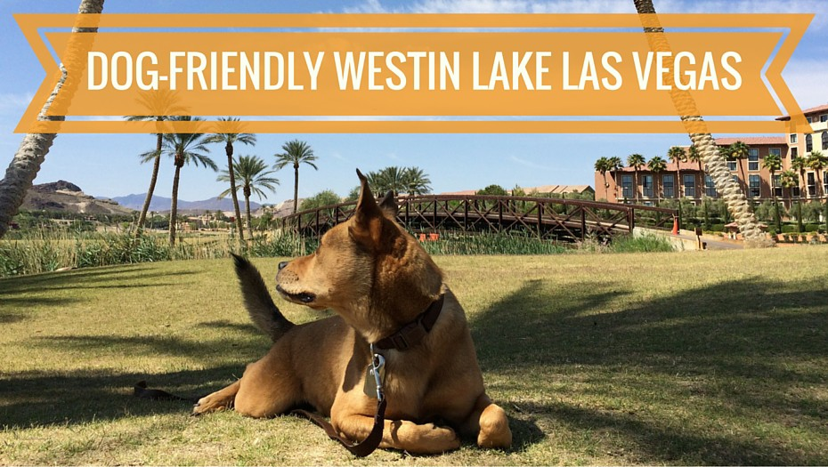 bodie-header-dog-friendly-westin-lake-las-vegas