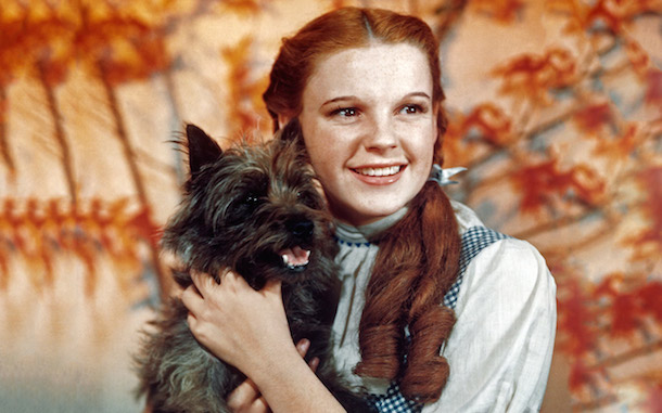 Dorothy (judy garland) and her cairn terrier Toto