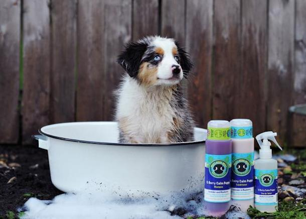 mutt-knows-best-shampoo