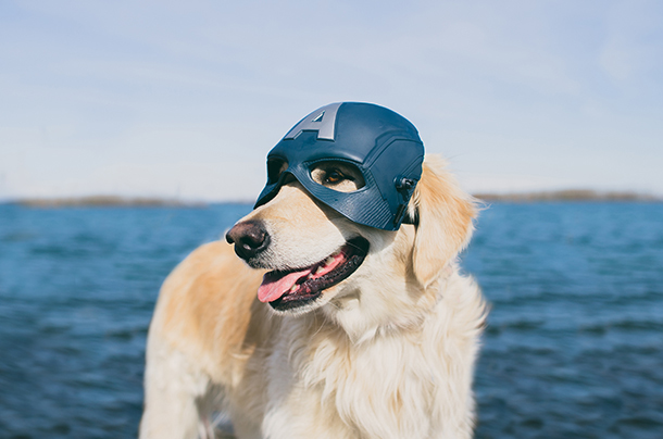 golden retriever wearing helmet to illustrate professional dog photography tips