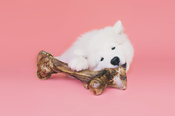 dog chewing bone