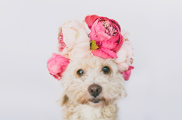 StudioWulf_Photography_flowers-dog-head-professional-dog-photography-tips