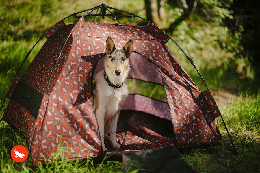 dog peeking out from tent in woodland