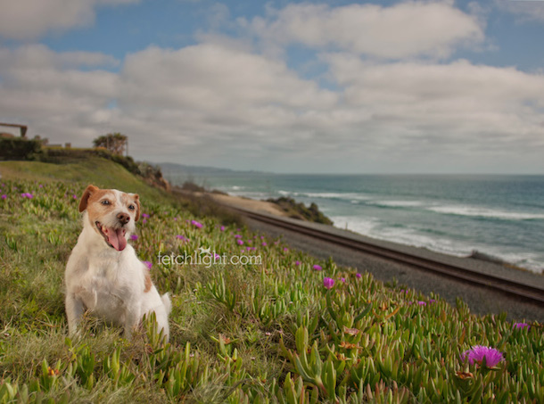 jack russell by coast dog photography tips