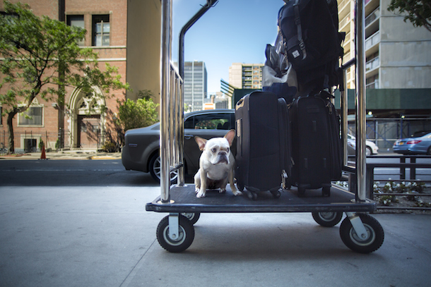 dog-friendly-new-york-four-seasons-rene-charles