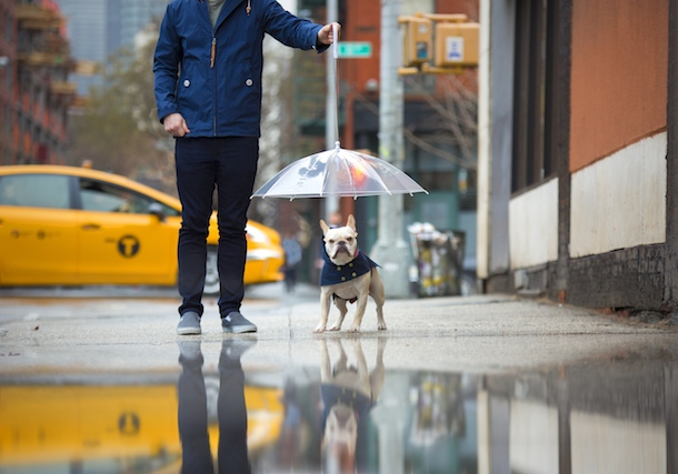 dog-friendly-new-york-rene-charles-reverse-umbrella
