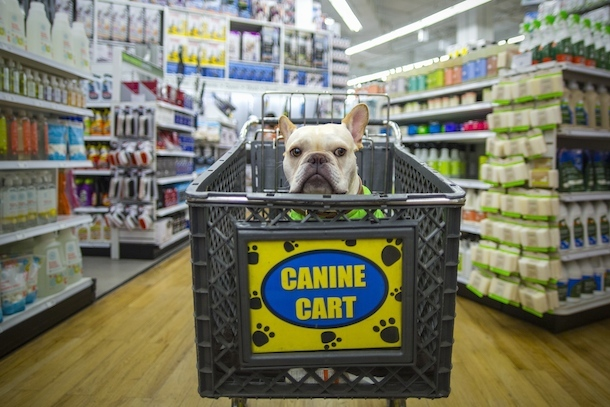 dog-friendly-new-york-rene-charles-bed-bath-beyond-canine-cart