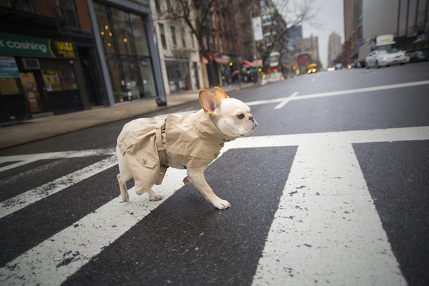 dog-friendly-new-york-rene-charles-trench