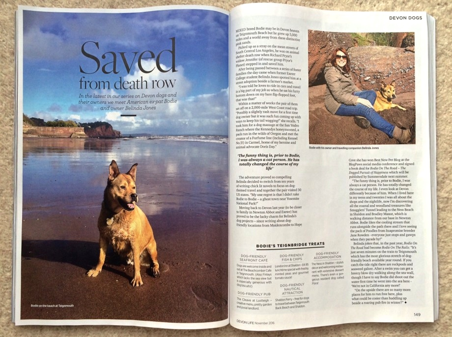 Devon Dogs article in Devon Life magazine featuring Bodie