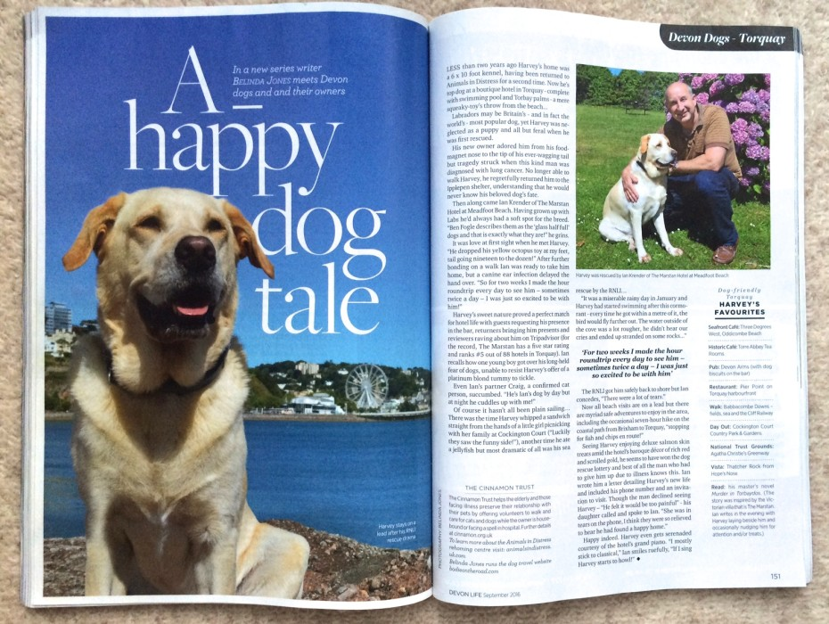 Devon Dogs series for Devon Life featuring Lab Harvey in Torquay