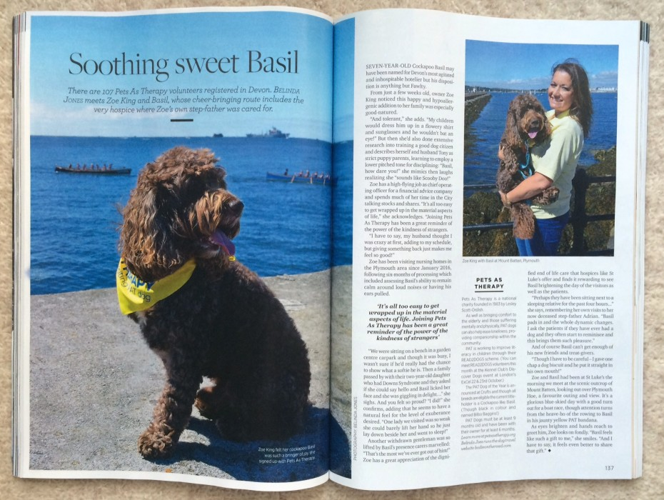 Devon Dogs series for Devon Life magazine featuring Cockapoo Basil in Plymouth