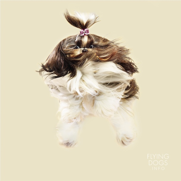 flying-dogs-toby