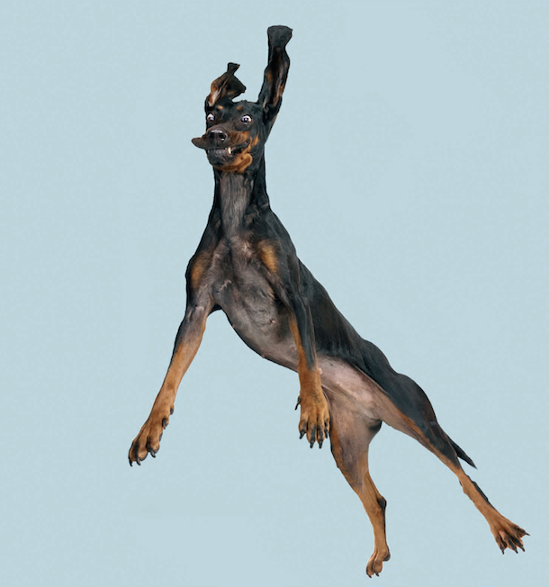 flying-dogs-book-bruno-juro-hound