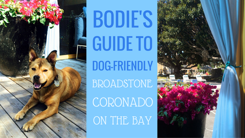 Bodies guide to dog friendly broadstone coronado bodie on the road bodies guide to dog friendly broadstone coronado solutioingenieria Images