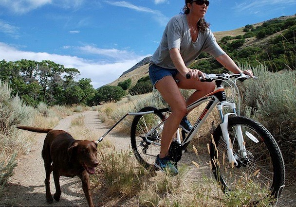 dog-cycleash-travelling-with-pets