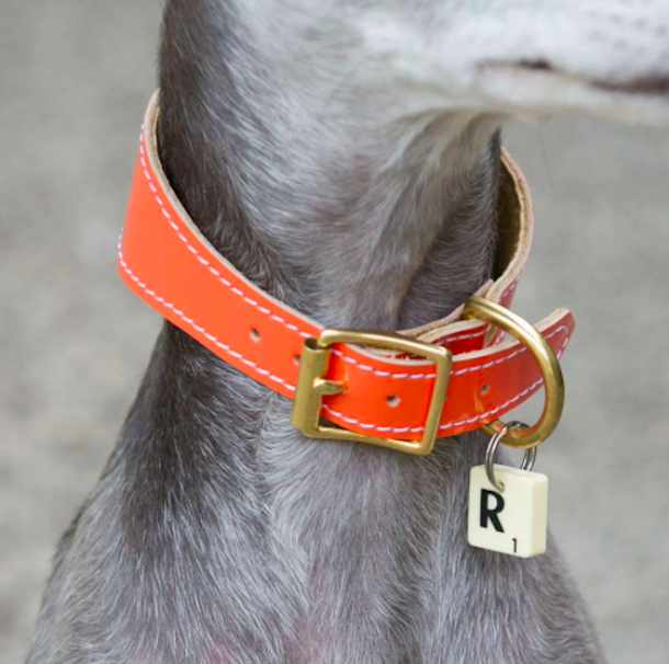 dog collar with scrabble letter charm