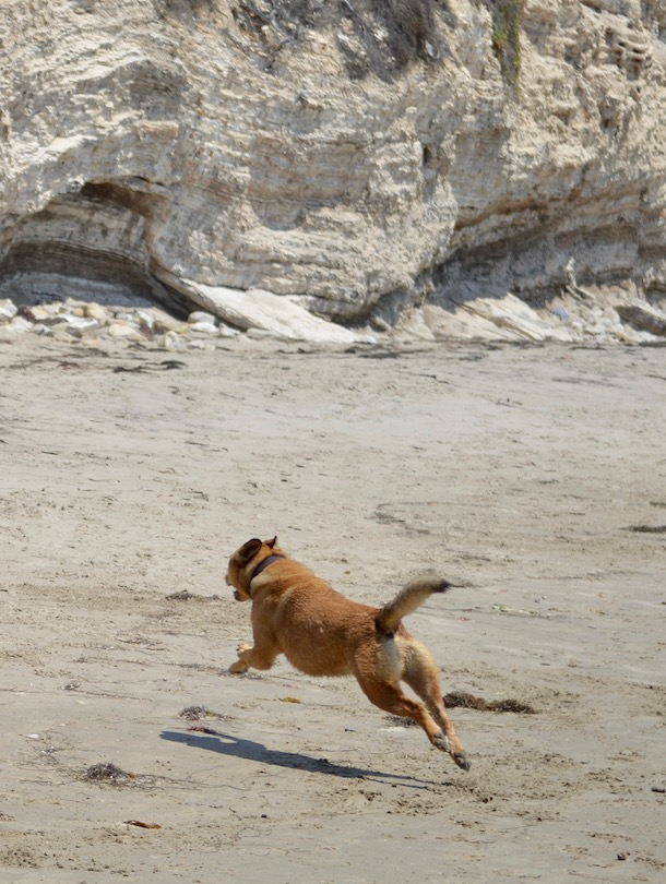 bodie-leaping-cliffs-dogfriendly-hendrys-beach-santa-barbara